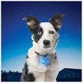 Nite Ize Pet Spotlit Collar Light