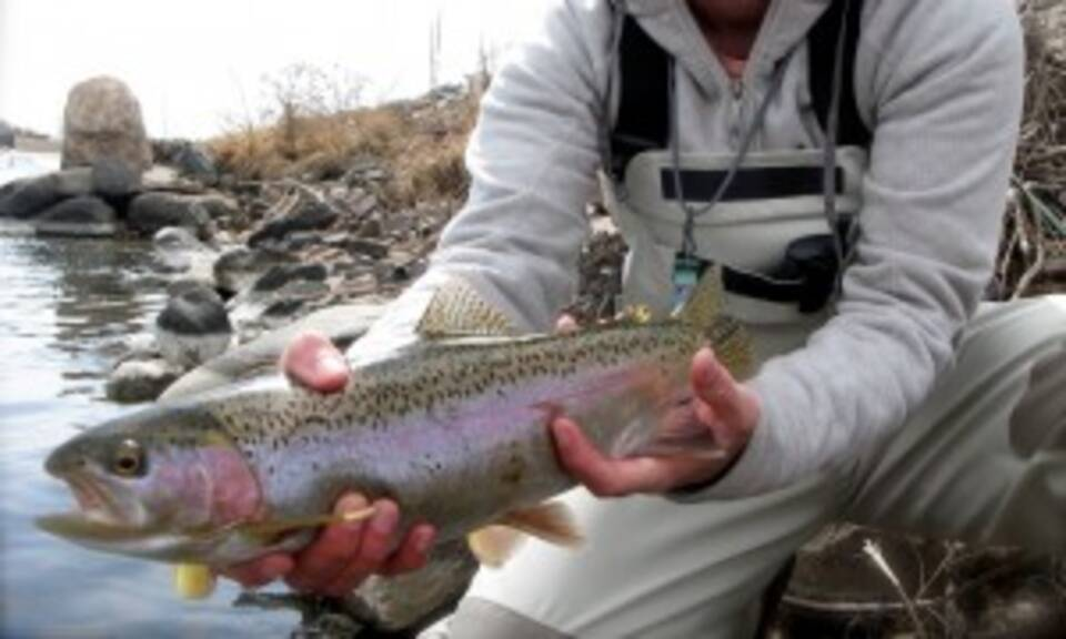 Hope for the river by will rice sage fly fish for Chatfield fishing report