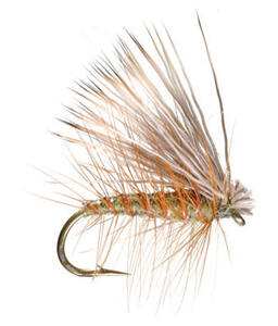 Adult Caddis