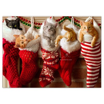 Adorable Kittens in StockingᅠCards - Set of 6