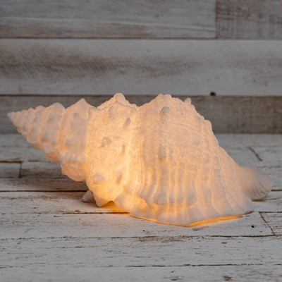 Conch Shell Accent Light