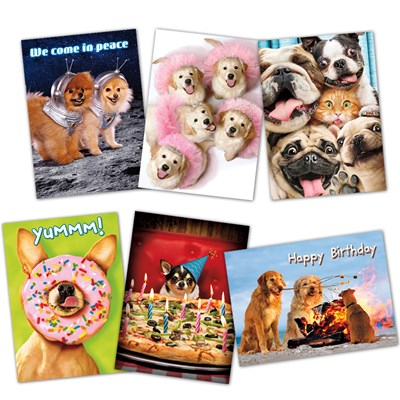 Assorted Dogs Gone Wild Birthday Cards - Set of 6