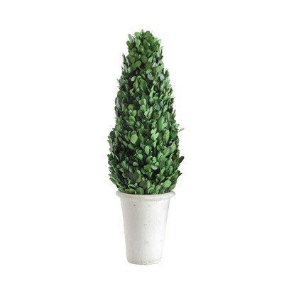 Boxwood Cone Shaped Topiary
