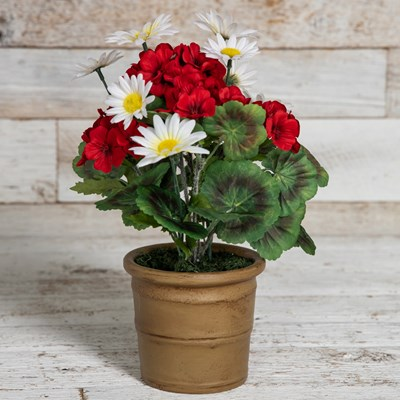 Geraniums and Daisies in Pot