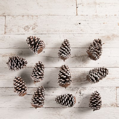 Decorative Frosted Pinecones - Set of 25