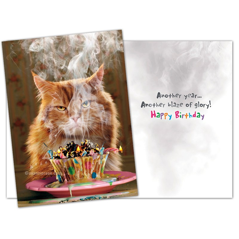 Assorted Quirky Kittens Birthday Cards