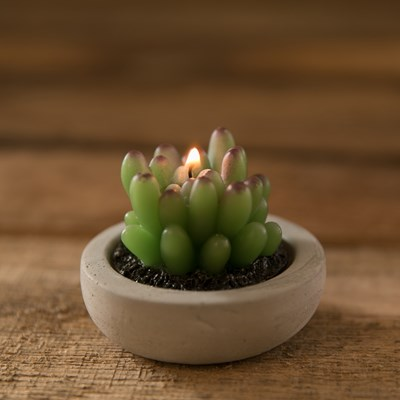 Succulent in Short Pot Candle