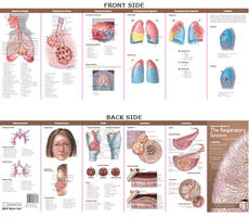 Anatomical Chart Company's Illustrated Pocket Anatomy: Anatomy & Disorders of The Respiratory System Study Guide