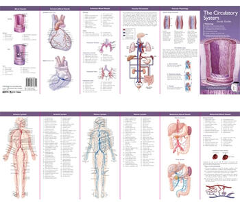Anatomical Chart Company's Illustrated Pocket Anatomy: The Circulatory System Study Guide