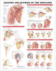 Anatomy and Injuries of the Shoulder Anatomical Chart