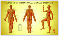 Acupoints of Traditional Chinese Medicine Chart: Male