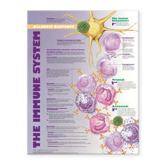 Immune System: Allergic Response Anatomical Chart