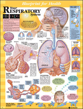 For health your respiratory system chart blueprint for health your respiratory system chart malvernweather Image collections