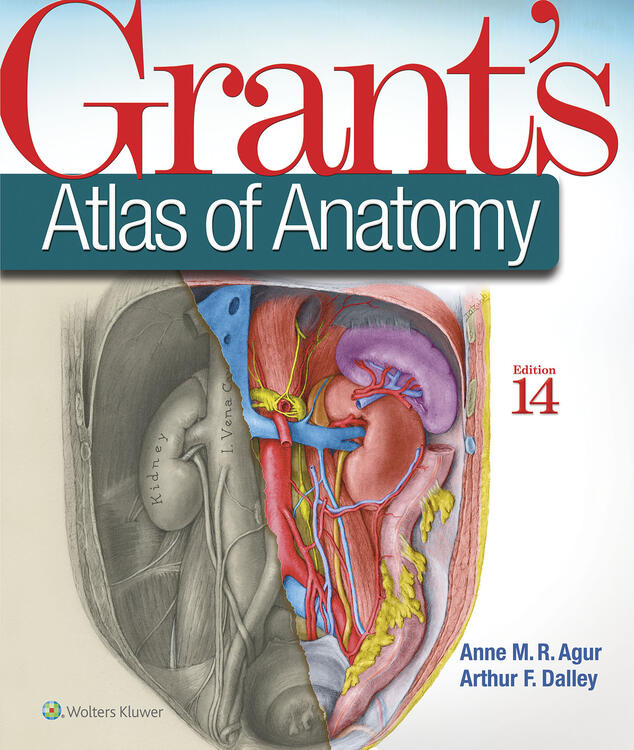 Grants atlas of anatomy fandeluxe Gallery