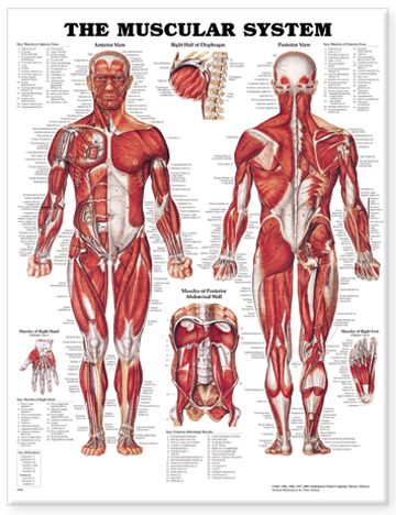 Anatomy - Medical Discipline Subject Areas - Research Guides at ...
