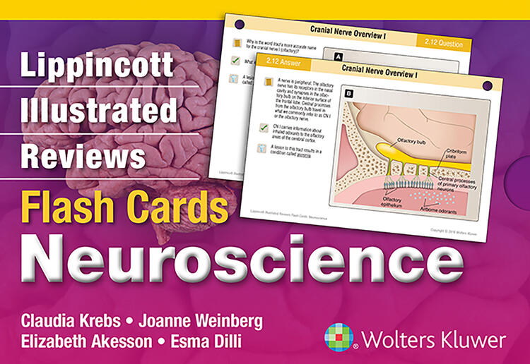 Lippincott Illustrated Reviews Flash Cards: Neuroscience