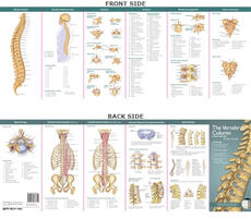 Anatomical Chart Company's Illustrated Pocket Anatomy: The Vertebral Column & Spine Disorders Study Guide