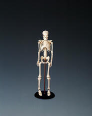 My First Skeleton (Tiny Tim)