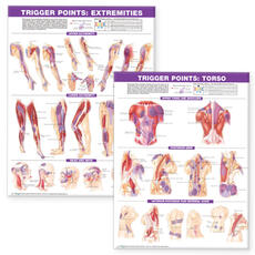 Trigger Point Chart Set: Torso & Extremities  Lam