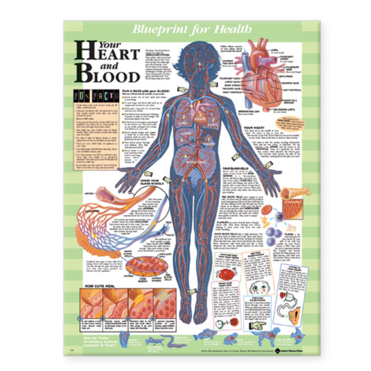 Blueprint for Health Your Heart and Blood Chart