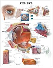 Eye Anatomical Chart