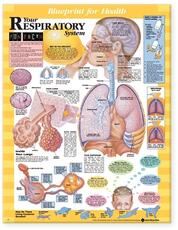 Blueprint for Health Your Respiratory System Chart