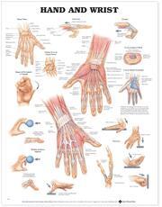 Anatomical Chart Company - Wolters Kluwer