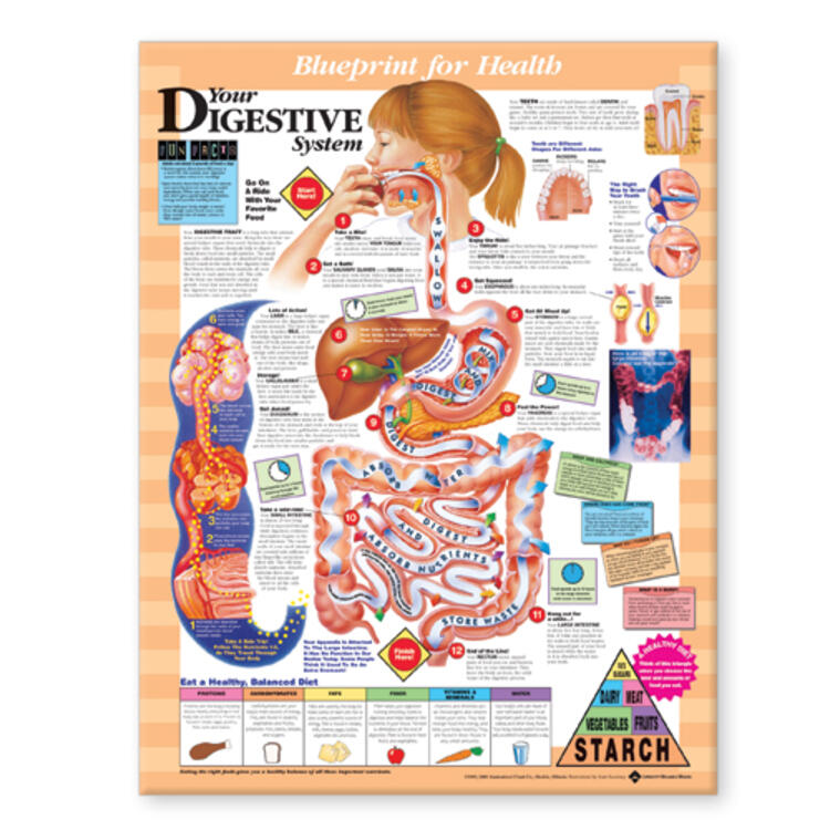 Blueprint for Health Your Digestive System Chart