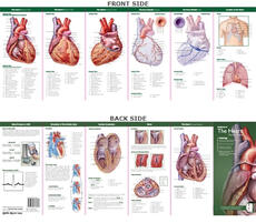 Anatomical Chart Company's Illustrated Pocket Anatomy: Anatomy of The Heart Study Guide