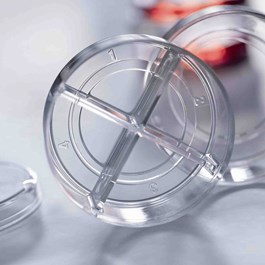 CELLview Cell Culture Dish, Four Compartments, Closeup